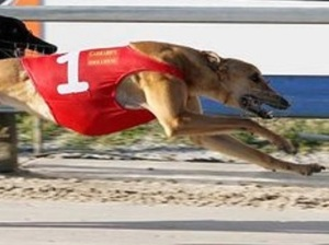 t172EdwardJensen-Greyhound_Real_Catch-big (2)